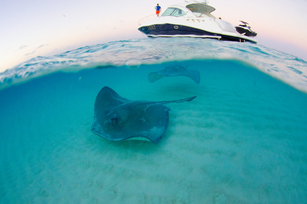 Stingray City Grand Cayman - A Grand Cayman Must Do. Charter a trip there with Five Star Charters Cayman.
